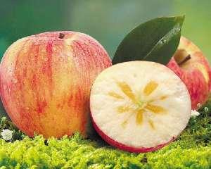 """""""糖心苹果""""多少钱一斤?是怎样形成的?"""